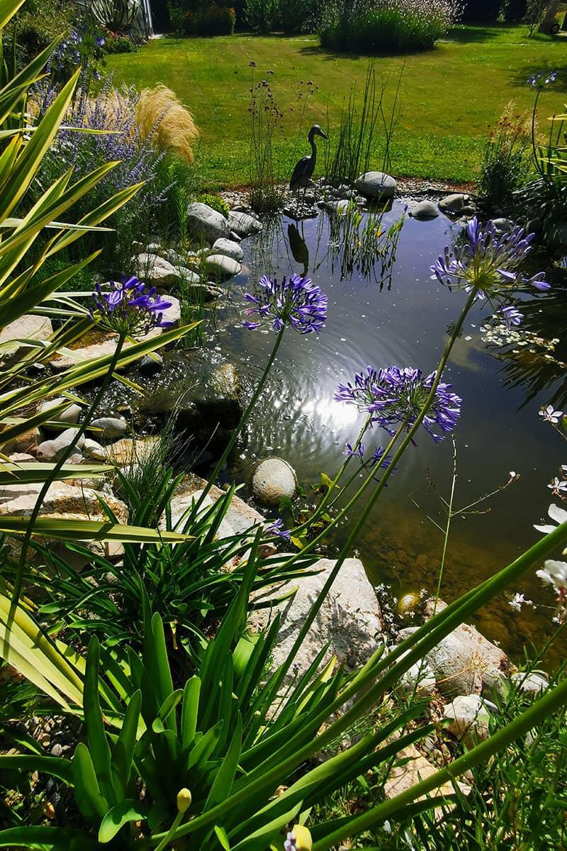 Paysagiste Jardin Aquatique Avignon Châteaurenard Saint Remy Provence