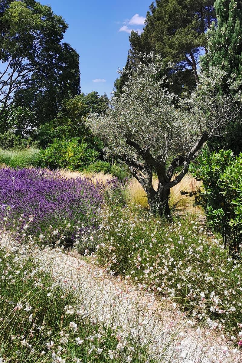Paysagiste Aménagement Jardin Lubéron Avignon Châteaurenard Saint Remy Provence